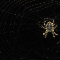 Ein bisschen uniquer Content: Spinning