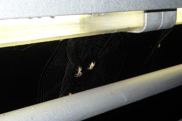 Wenn's dunkel wird am Innenhafen, gehen auch die Spinnen schlafen.