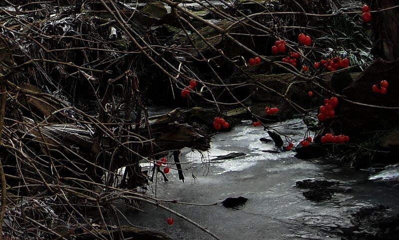 Winterbeeren
