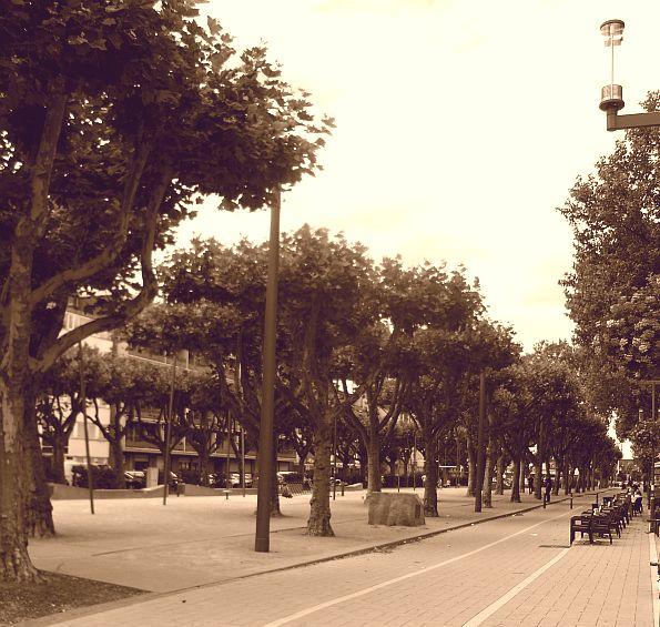 Der Saporoshje-Platz mit der historischen Baumgruppe.